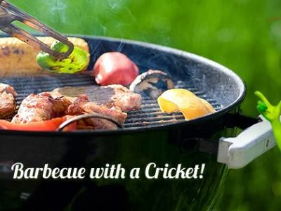 Cricket - Fire in the Hole! 1