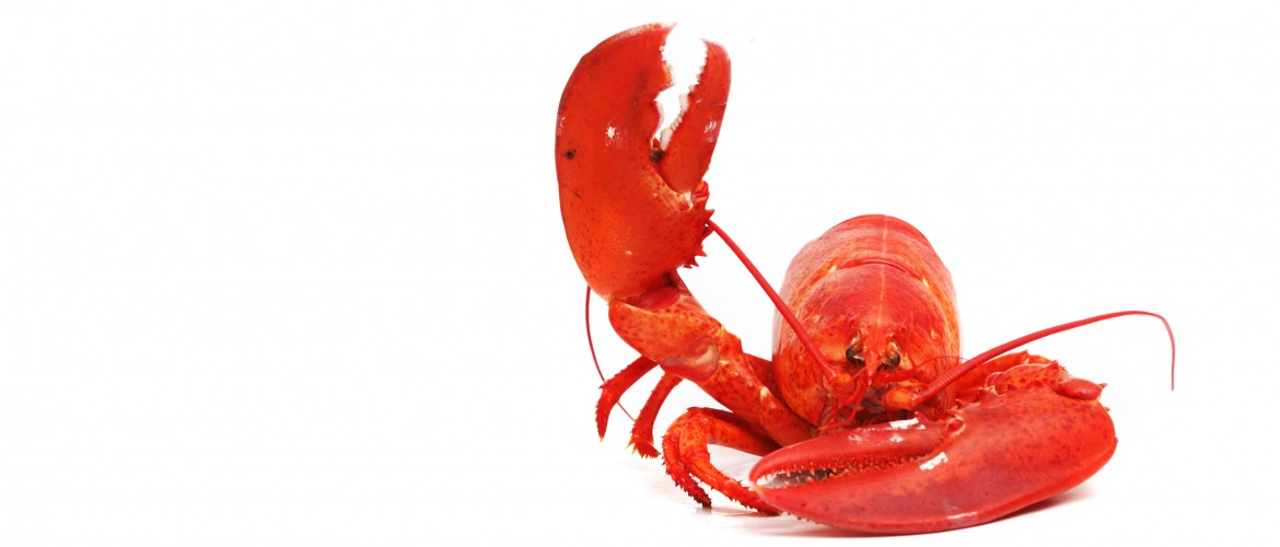 how to reheat cut cooked lobster